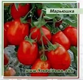 Каталог томатов