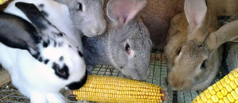 Чем можно кормить кроликов в домашних условиях: виды кормов, нормы кормления