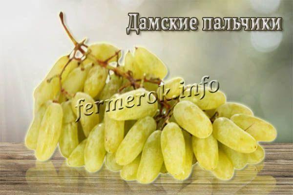 Всё о винограде дамские пальчики - общая информация - 2020