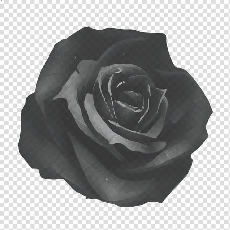 Фото черных роз