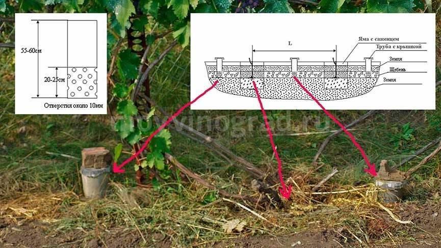 Как летом поливать яблони частота и правила сколько раз и можно ли холодной водой