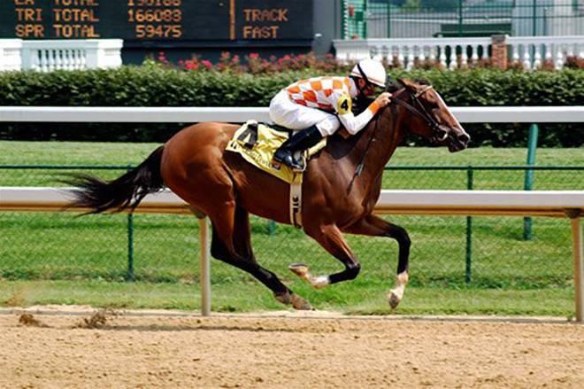 С какой средней скоростью бегает лошадь