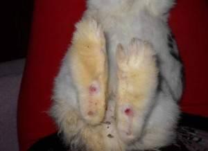 Травма позвоночника у кролика