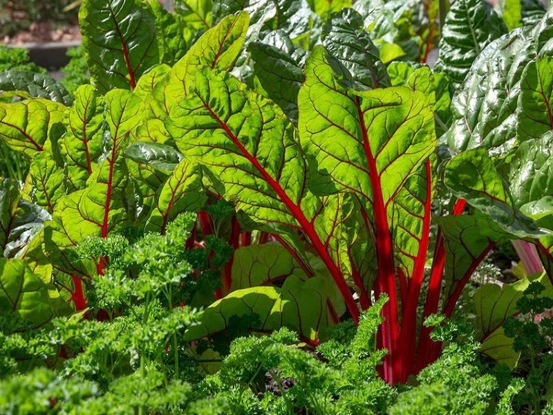 Какие растения совмещаются, что рядом с чем можно сажать