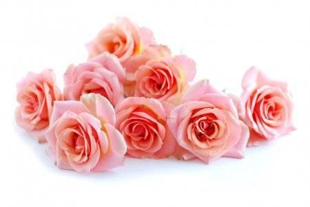 Роза коралловый сюрприз — визитная карточка крыма | о розе