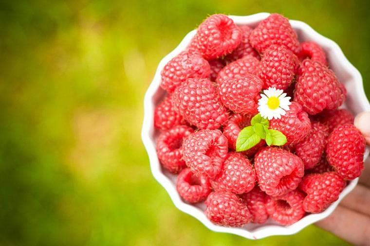 Свежая малина: от чего помогает, целебные и полезные свойства, витамины