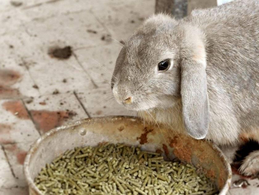 Как и чем кормить кормящую крольчиху после окрола