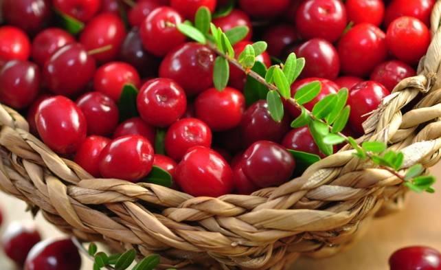 Сорт клюквы стивенс: особенности выращивания и ухода