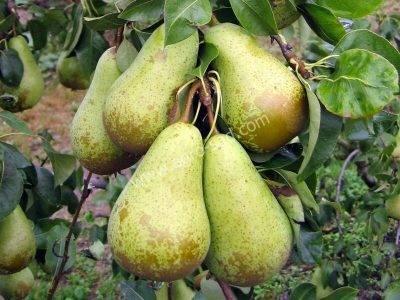 Инструкция по посадке растений под яблоней