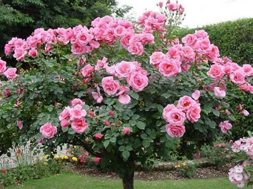 Как сделать стильный цветник из роз – подбор сортов, правила ухода