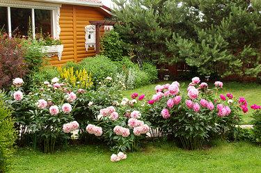 Лилии в ландшафтном дизайне: секреты правильного композиционирования