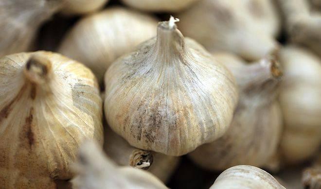 Сорт китайский чеснок — особенности выращивания