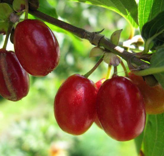 Плодовые деревья и кустарники: какие можно сажать рядом, какие нельзя