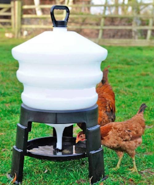 Поилка для куриц своим руками: как изготовить самодельные чашечные или ниппельные приспособления для поения кур?