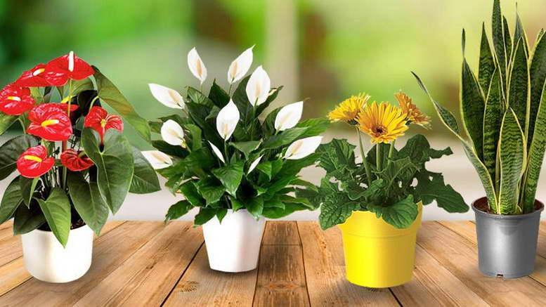 Подкормка герани, чтобы пышно цвела в домашних условиях: йод, перекись, удобрения