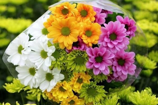 Чтобы хризантемы дольше стояли в вазе