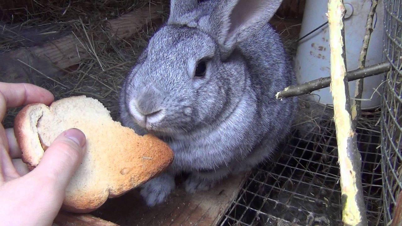 Полезный элемент кроличьего рациона – веточный корм
