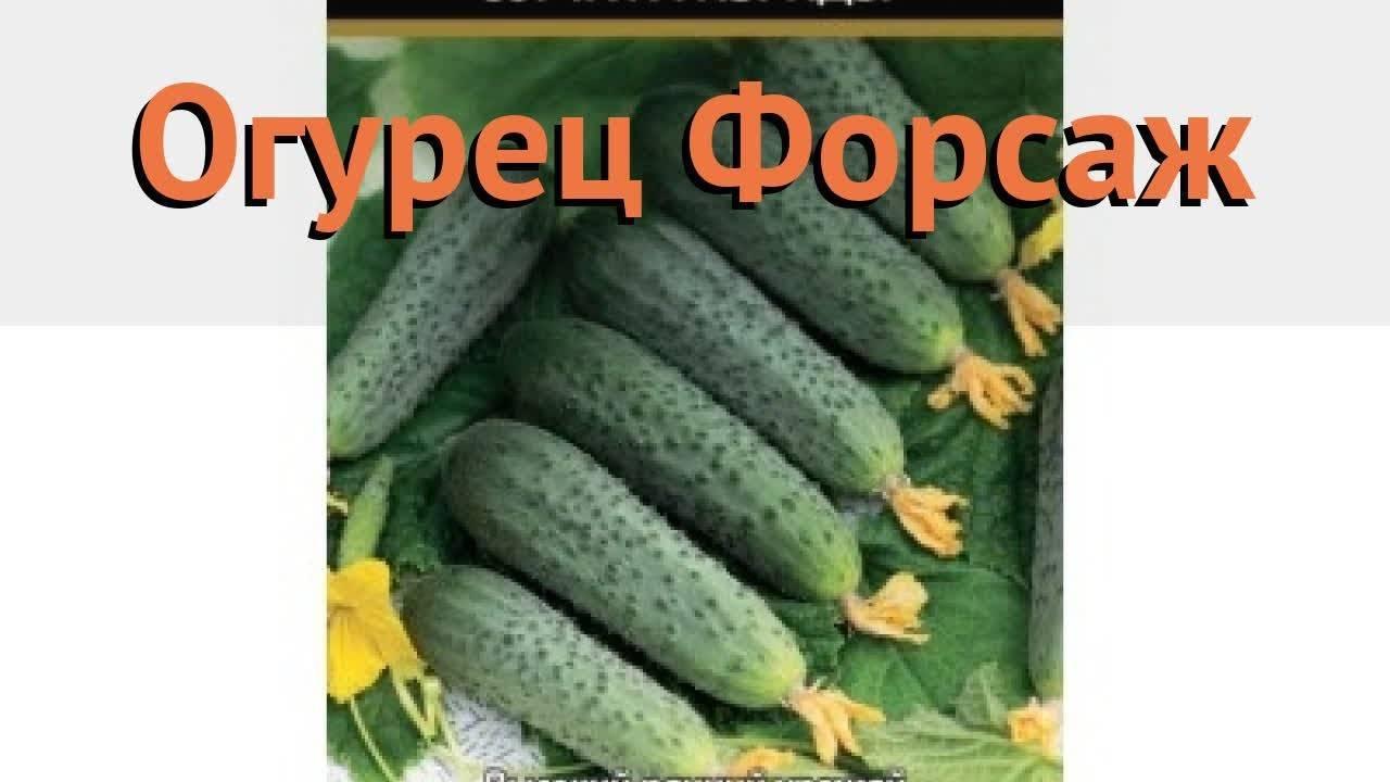 Сорт огурцов престиж f1: описание сорта, посадка и уход