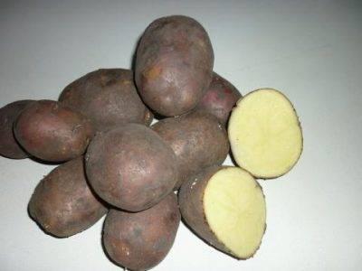 Находка для огородников — сорт картофеля нандина. основные характеристики, рекомендации по уходу и выращиванию