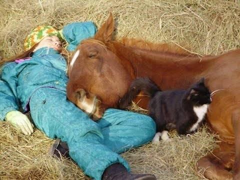 Как спит лошадь на самом деле?