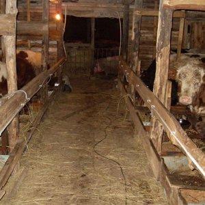Сарай для коров своими руками – основные особенности возведения