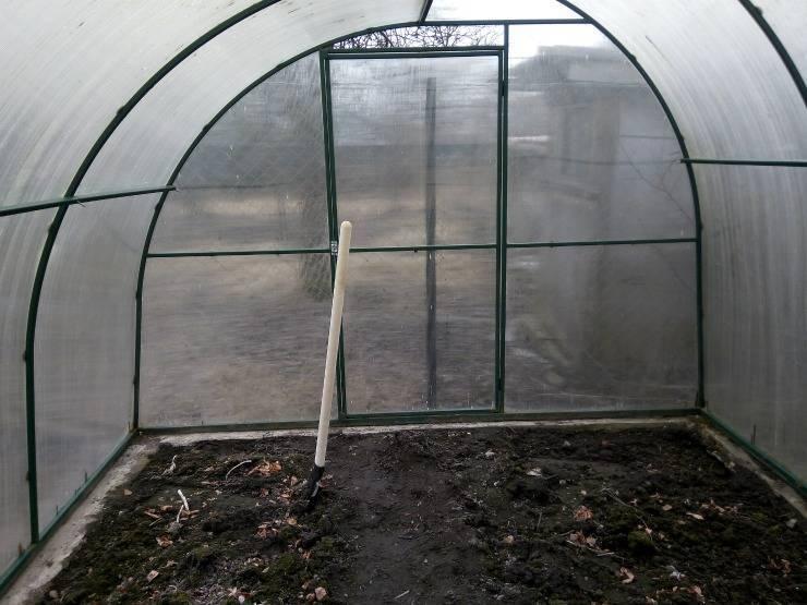 Подкормка огурцов в теплице из поликарбоната: чем удобрять весной и как подготовить почву и грядки?