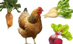 Можно ли цыплят бройлеров кормит сырой рыбой