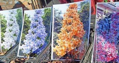 Особенности дерева лилии