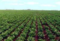 Пестициды от сорняков: для чего нужны гербициды для картофеля? раундап, лазурит, титус: инструкция по применению, действие и дозировка
