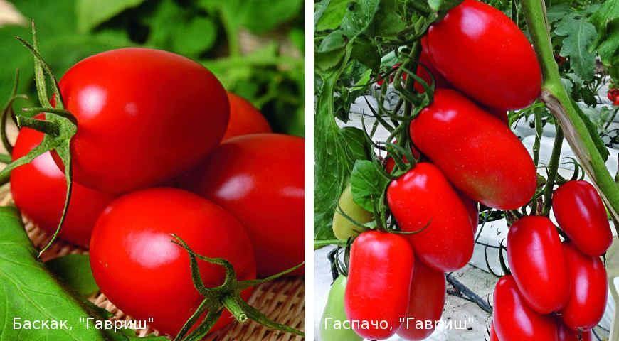 Гаспачо – любите ли вы томаты так, как их любим мы?
