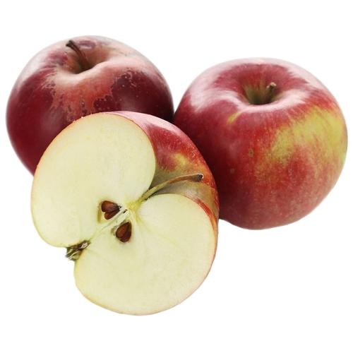 Яблоки - айдаред: описание сорта, свойства плодов и особенности выращивания - общая информация - 2020