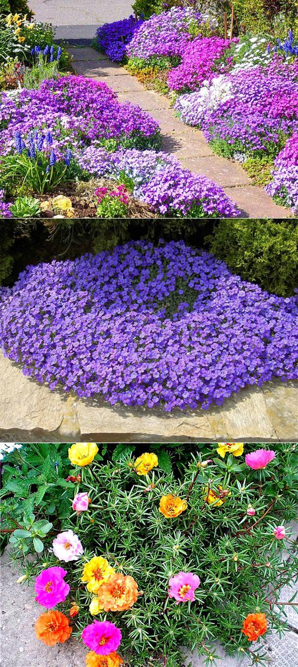 Однолетники для клумбы непрерывного цветения - раз посеял, радуют до поздней осени.   красивый дом и сад