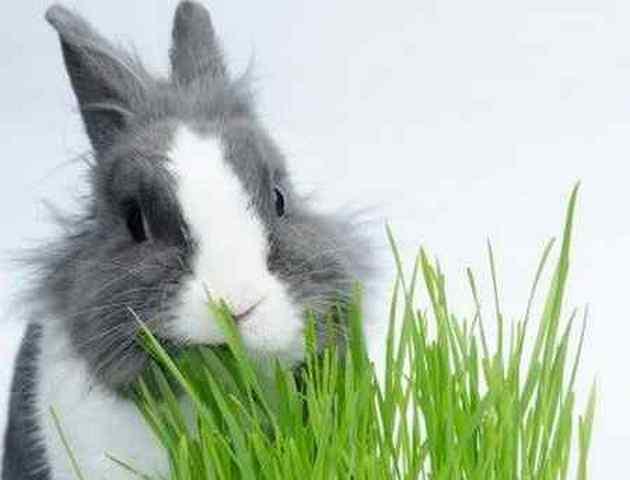 Какую можно давать кроликам траву, а какую давать нельзя?