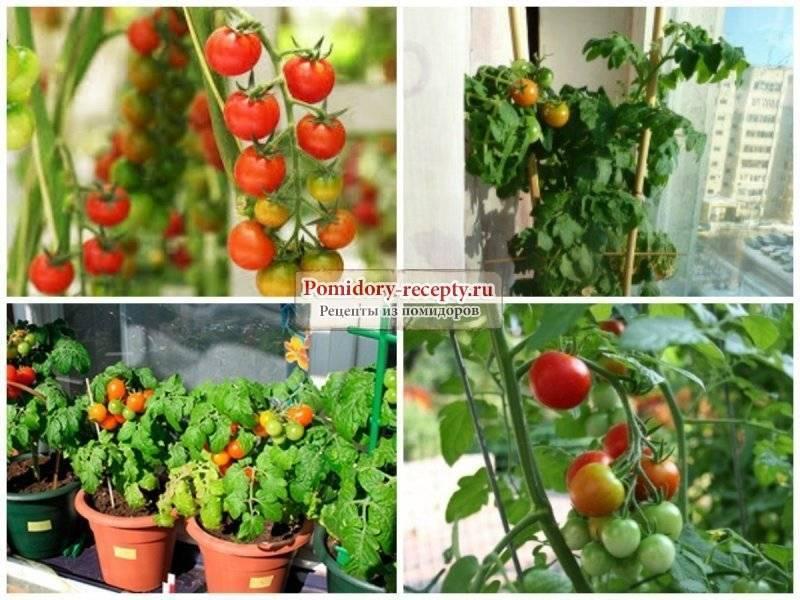 картинки символов когда лучше садить помидоры для балкона фото совсем