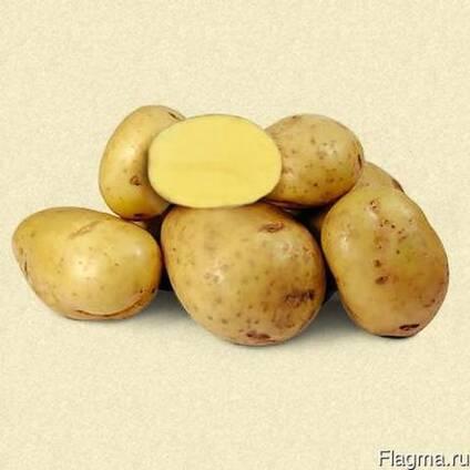 Китайское суперраннее чудо — картофель «киранда»: описание сорта и фото