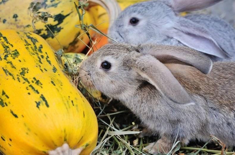 Чем и как правильно кормить карликовых кроликов