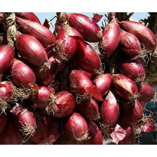 О сортах красного лука: описание, название красных сортов, отличие