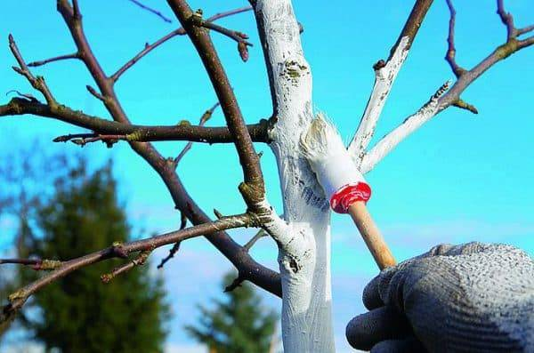 Обработка деревьев весной от вредителей и болезней | красивый дом и сад