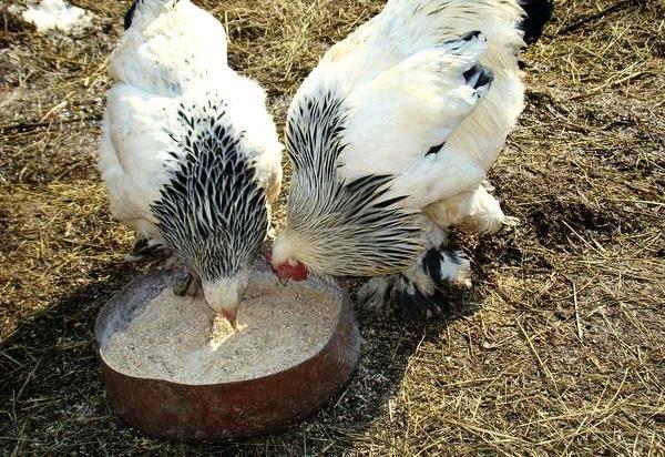 Таблетки альбен в ветеринарии: инструкция по применению