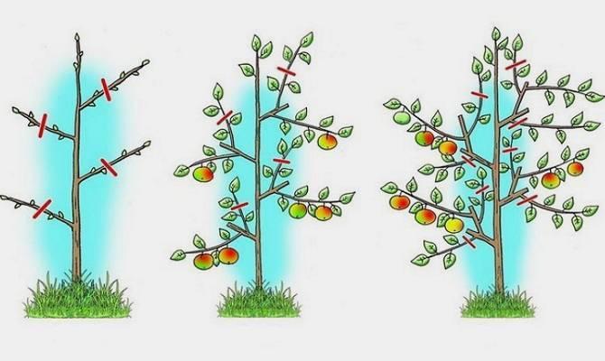 Весенняя обрезка плодовых и ягодных культур