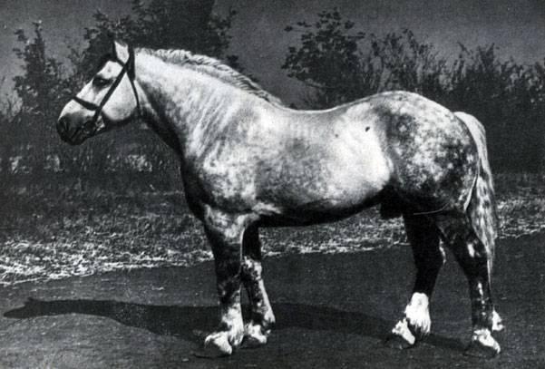 Состояние буденновской и донской пород лошадей на 2019 год