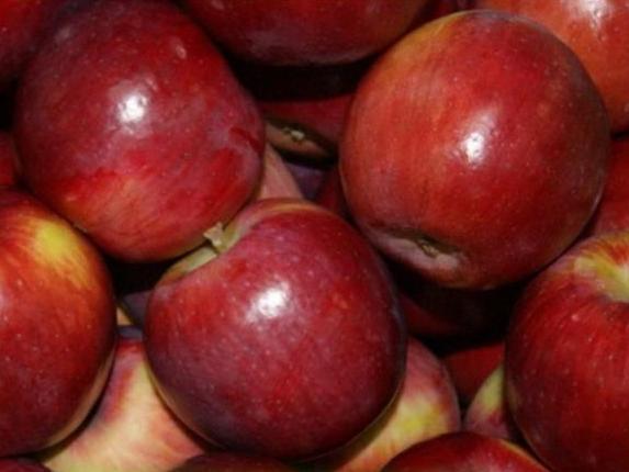 Секреты успешного выращивания яблони «беркутовское»