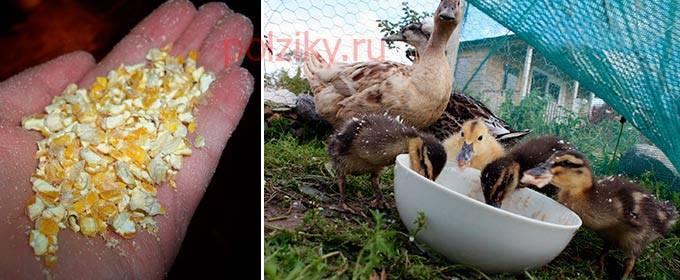 Чем кормить утят? виды кормов и подробный рацион новорождённых утят