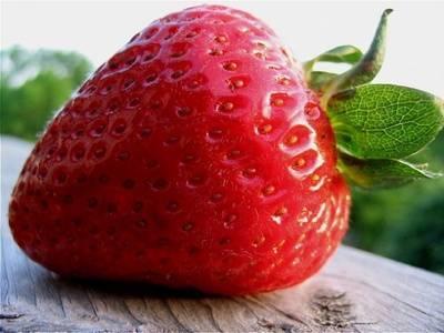 Чем подкормить клубнику во время плодоношения - дрожжами, золой, борная кислота как удобрение