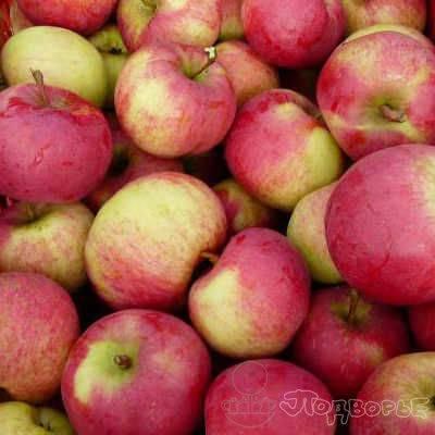 Описание и характеристики яблони сорта ауксис, посадка, выращивание и уход