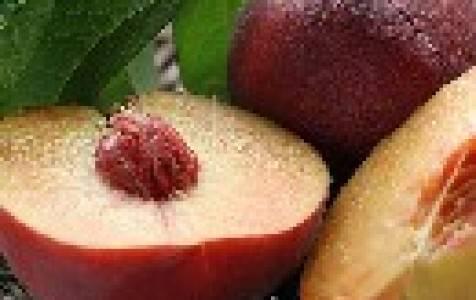 Что такое нектарин и чем он отличается от персика
