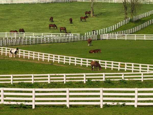 Стандартные размеры денника для лошади. идеальный вариант, как сделать подходящее стойло для лошади