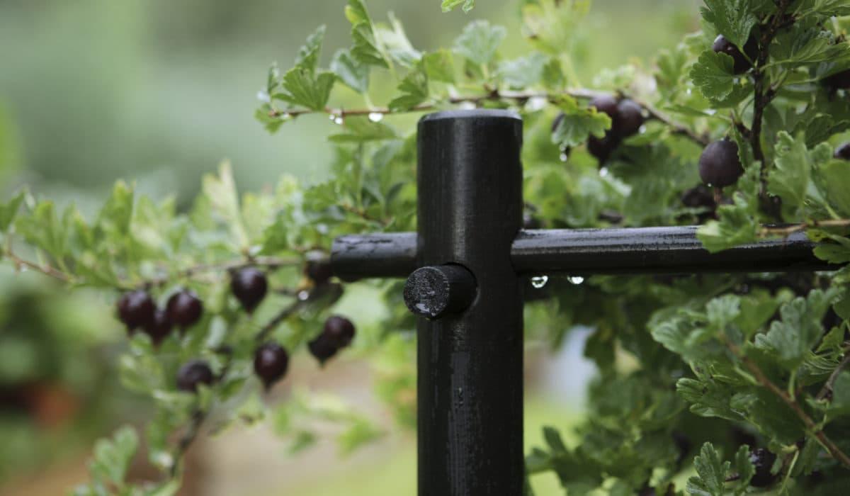 Как сделать подпорки для смородины: выращивание в кустодержателе