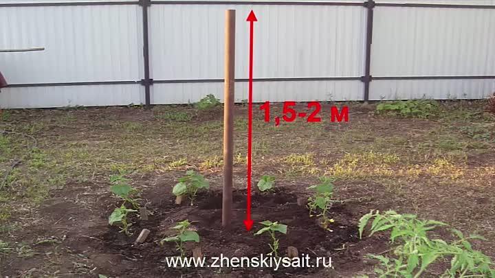 Оригинальные способы посадки и выращивания огурцов на грядках