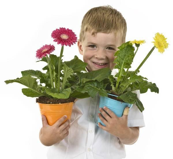 Цветы для детской комнаты, 12 лучших